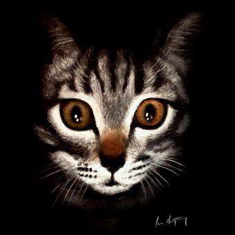 cat picture artist aberdeenshire