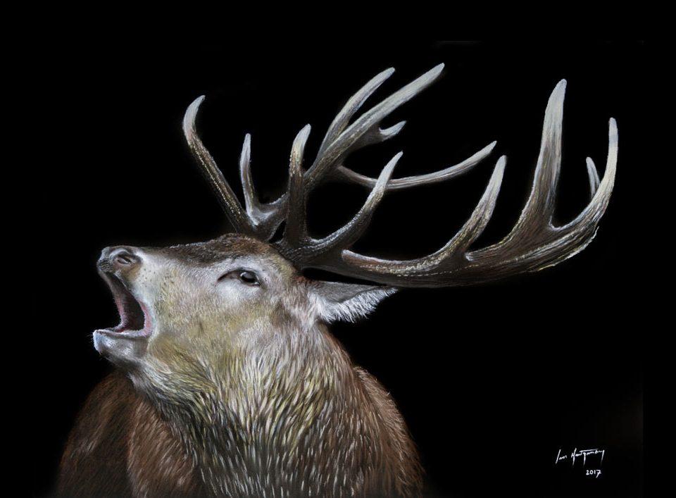 stag portrait artist scotland